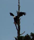 Eagle.Safe Landing.jpg