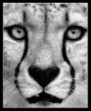*** Black & White, Sepia ***