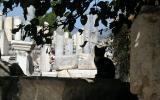 Ephesus kitten monitors the ruins