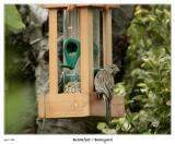 Breakfast at the Birdfeeder