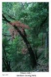 Colorful Poison Oak