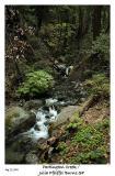 Partington Creek in Big Sur