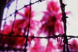 Tuol Sleng, a former high school turned into a torture/prison camp during the Pol Pot regime. Infra-red film gives the eerie color.