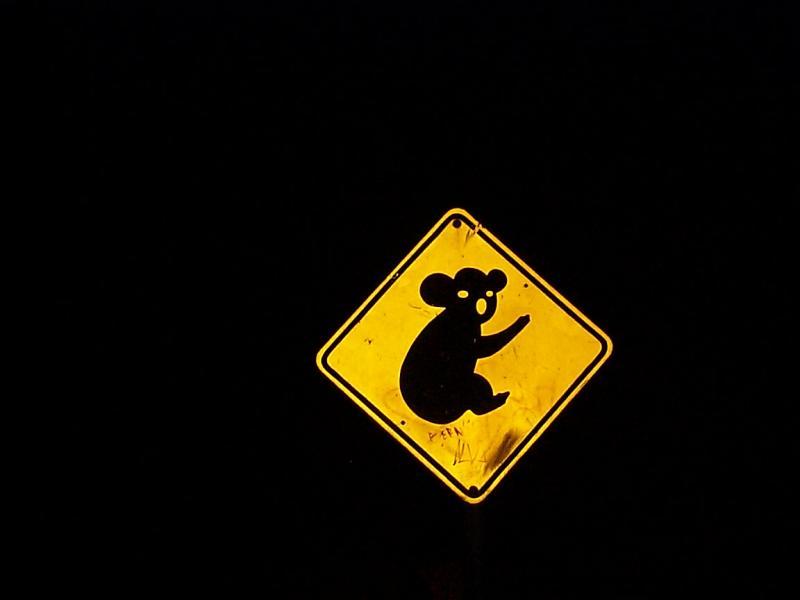 Koalas - watch out!  Doesnt it look like Mr. Bill??