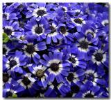 Flowers from the Botanic Garden