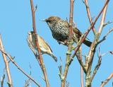 Birds net.jpg
