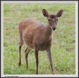 Deer - CRW_1390 copy.jpg