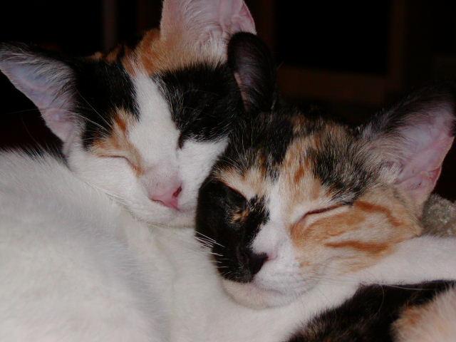 Sisterly Hug