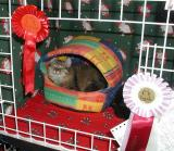 Essi has Christmas decoration in her show pen