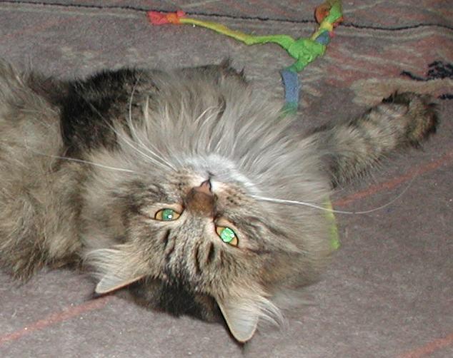 tassya_floor200104_head.jpg