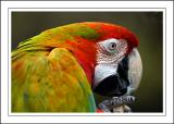 Macaw ~ Birdland, Bourton-on-the-Water, Cotswolds