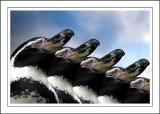 Penguin identity parade ~ Birdland, Bourton-on-the-Water