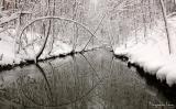 beauty of winter 2004