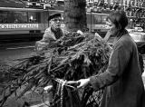 Shopping for a christmas tree in Amsterdam