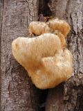 Fungi of Northern Virginia