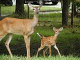 Mom & Baby  2