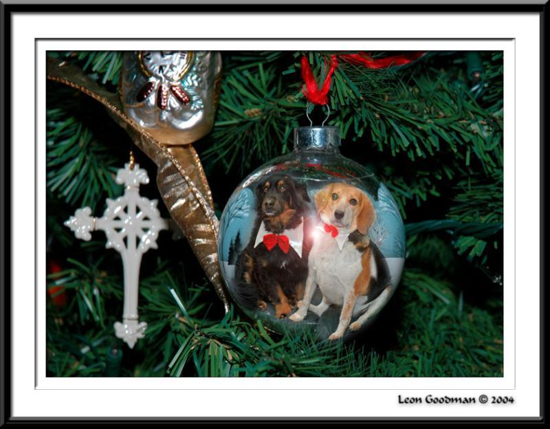 Dogs on ball web matte 5557.jpg