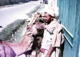 Man and his Camels