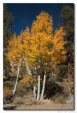 Fall Color - Eastern Sierras 2004