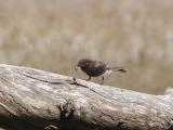 Bird finds lunch