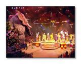 Festival of the Lion KingAnimal Kingdom