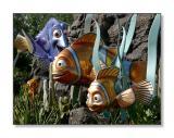 'Finding Nemo' FishEpcot