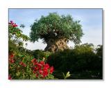 The Tree of LifeAnimal Kingdom