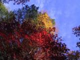 Red Sky Blue