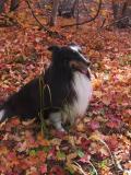 Sucha Leaves
