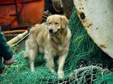 Seadogby Loren Charif