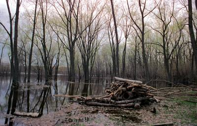 Spring inondation