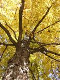 fall_2002