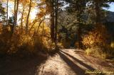 golden road 3