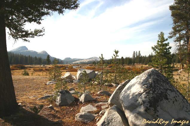 Tuolumne Meadows YNP 24