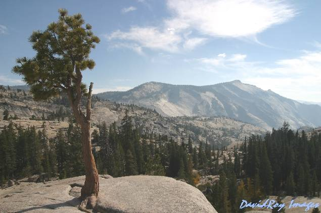 Olmsted Point YNP 5