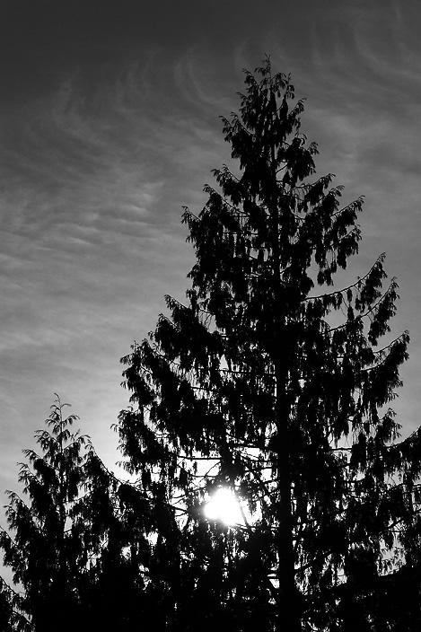 DSCF4639_cedars at Sunset.JPG