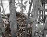 Bird's Nest Tinted.jpg
