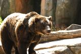 Grizzly-0001.jpg