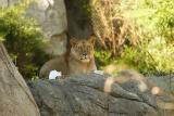 Lioness&Cubs-0004-after.jpg