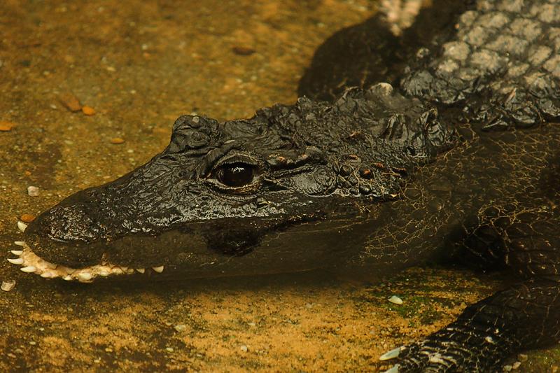 Croc-0001.jpg