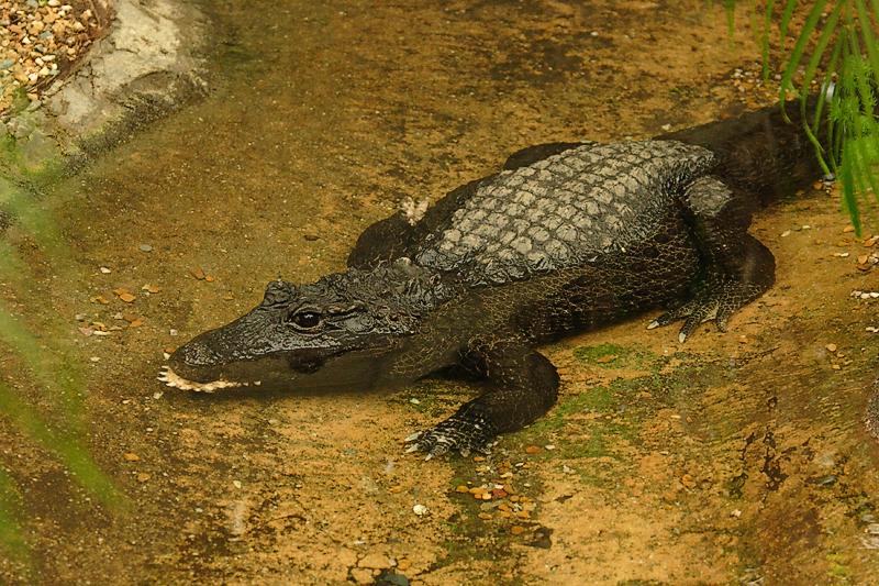 Croc-0002.jpg