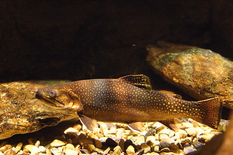 Fish-0002.jpg
