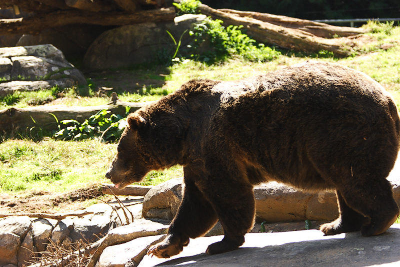 Grizzly-0002.jpg