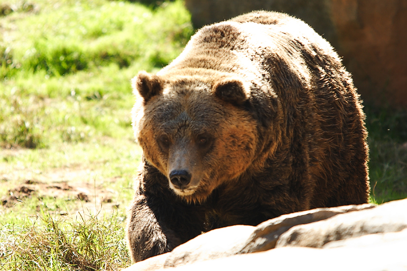 Grizzly-0005.jpg