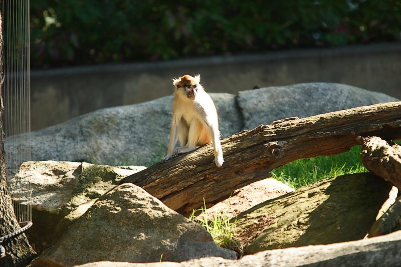 Monkeys-0002-after.jpg
