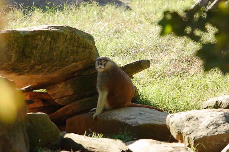 Monkeys-0009-after.jpg