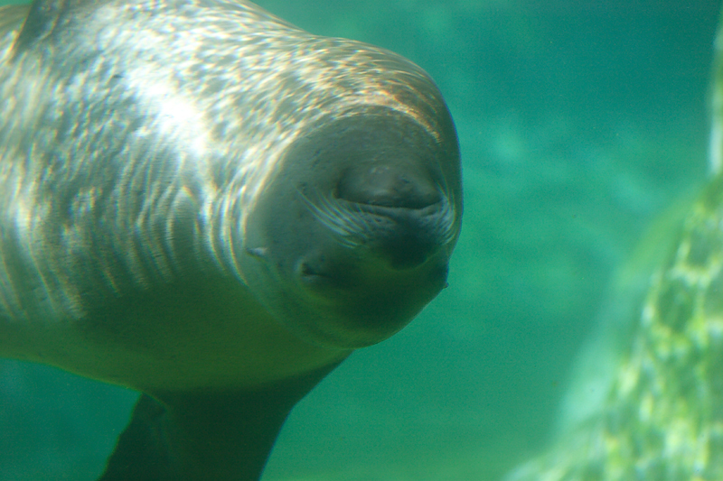 SeaLions-0004-after.jpg