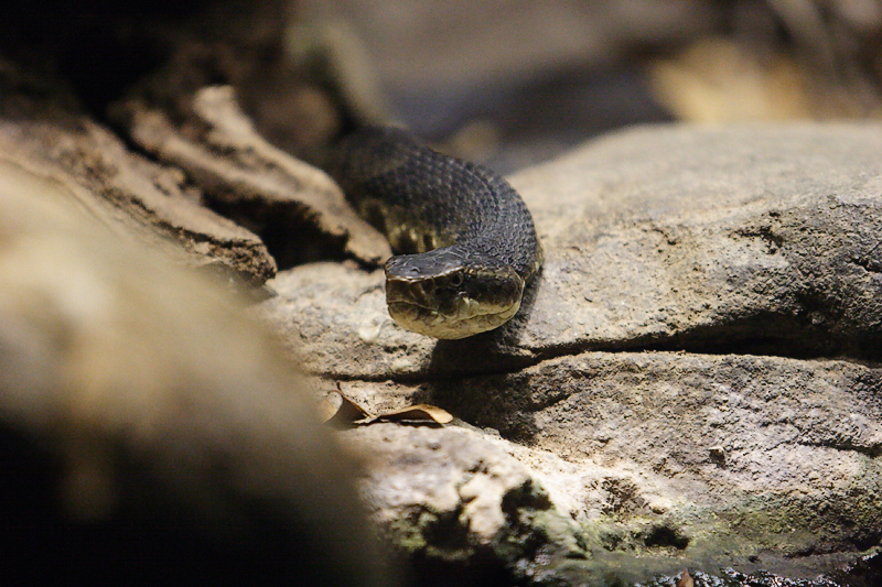 Snakes-0005-after.jpg