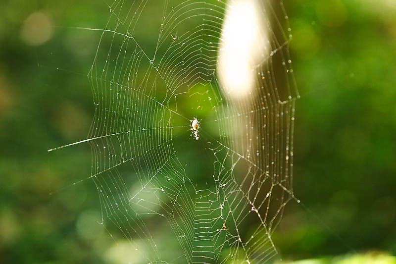 Web-0004-after.jpg