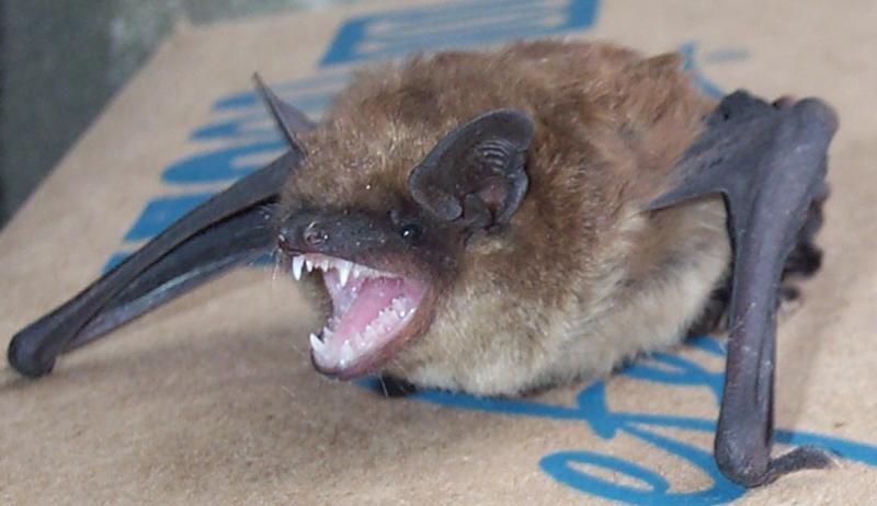 bat in my basement got it general discussion uscutter forum